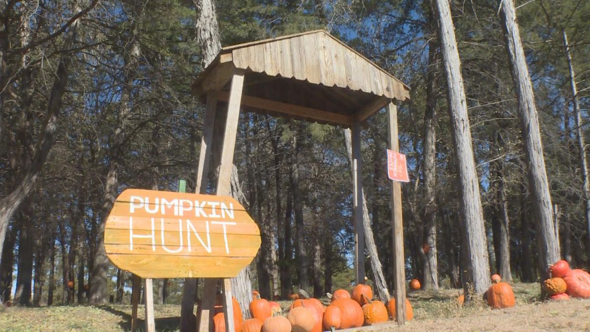 The Pumpkin Hunt allowed guests to choose a pumpkin to decorate. (SOURCE: Jace Barraclough/KNOP)