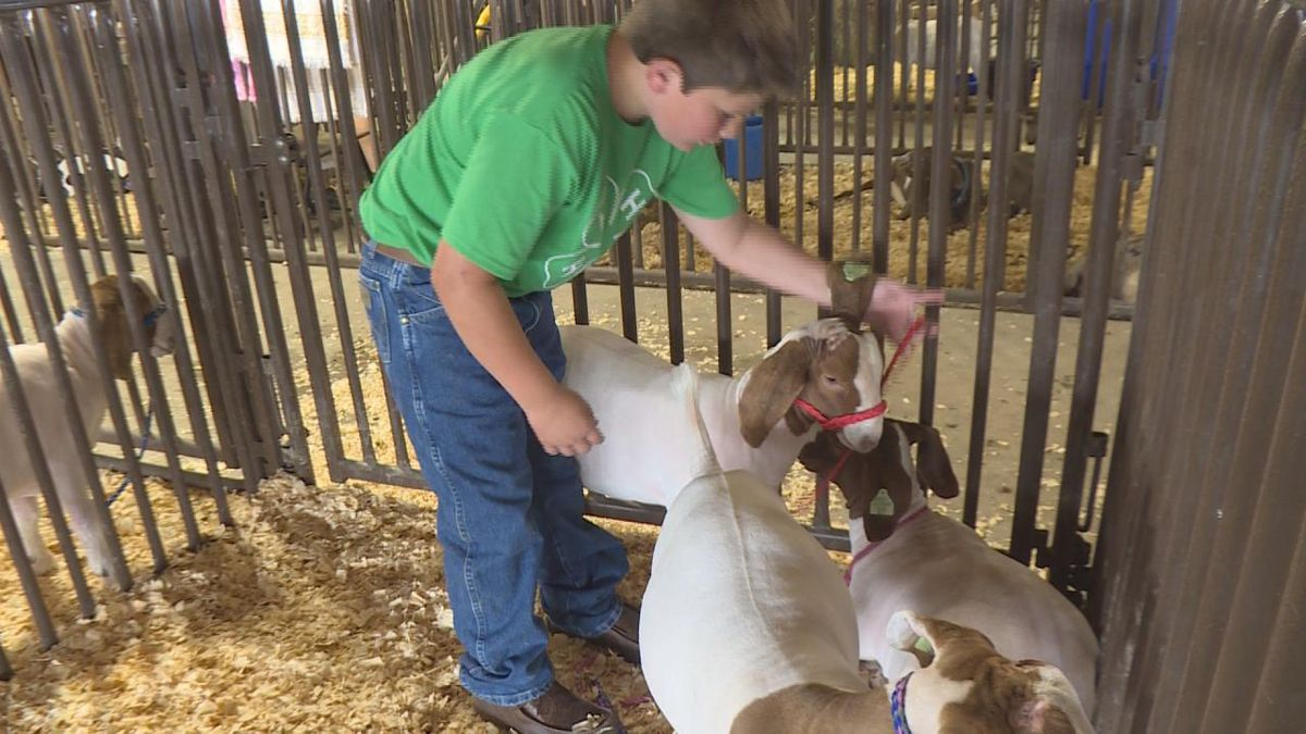 4-h goat show at the fairgrounds