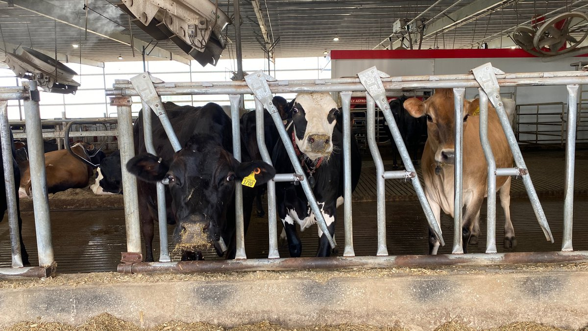 A new study from the University of Nebraska-Lincoln shows that growing the dairy industry, to...