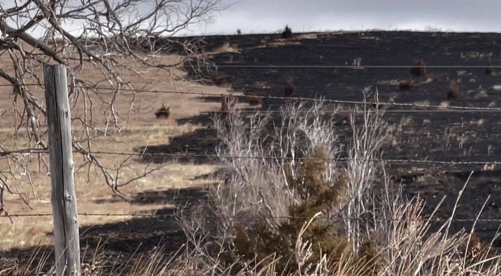 Image shows the north edge of the fire on the Moorefield/Brady Road, north of Moorefield. High...