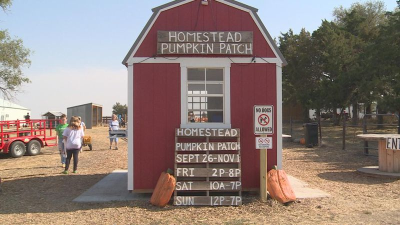 The Homestead Pumpkin Patch is finally open for all of your fall activities.