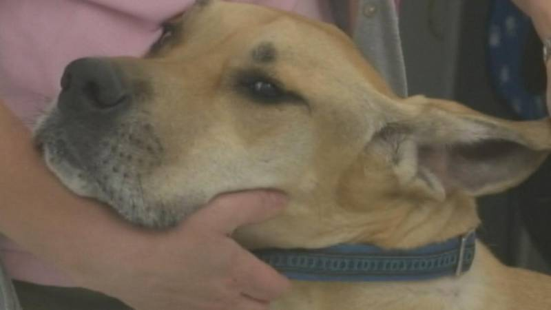 Local veterinarian provides tips on how to keep your pets safe during the 4th of July weekend.