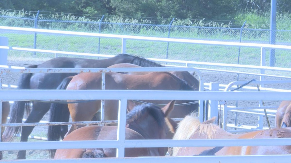 Horses ready for the Rodeo Slack