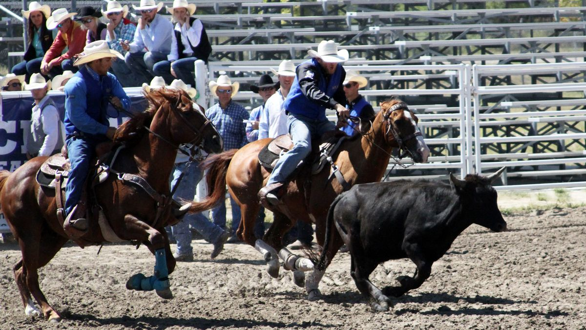 JD Draper (right) prepares to wrestle a steer at the MPCC Stampede last fall. Draper finished the collegiate rodeo season third in the nation. (Credit: MPCC Athletics)